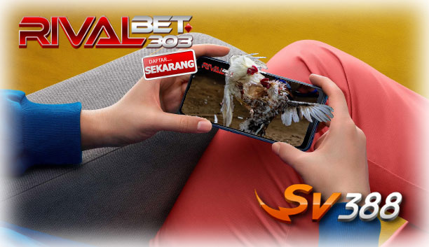 Adu Ayam? Situs Sv388 Rivalbet303 Recommended